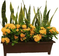 Create a sun tolerant & summer friendly container garden using sansevieria and yellow ixora | Video tutorial | http://www.youtube.com/watch?v=uUWJtBBshqE