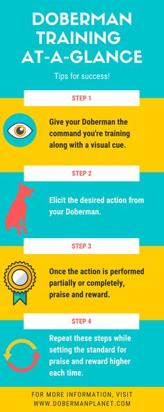 Follow these quick and easy steps (for any command!) to ensure success! For more details, visit dobermanplanet.com. #dobermantraining #dobermanpinscher #doberman #dobermanplanet Doberman Training, Leash Training, Crate Training, Training Your Dog, Training Tips, Natural Instinct, At A Glance, Doberman Pinscher, Happy Animals