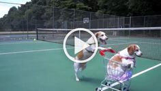 Other dogs push dogs on trolleys Quick Workout At Home, At Home Workouts, Ninja Cats, Relaxing Gif, Poor Dog, Man And Dog, Funny Cats And Dogs, Dogs Golden Retriever, Animais