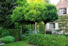 Boompje voor in de voortuin. Country garden with standard Robinia pseudoacacia 'Umbraculifera' trees and a trained pear tree on house wall - Photo by Elke Borkowski Cottage Garden Patio, Cottage Garden Design, Cottage Gardens, Back Gardens, Small Gardens, Outdoor Gardens, Garden Shrubs, Garden Trees, Espalier