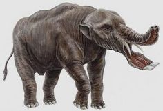 The Platybelodon, an ancestor of the elephant.