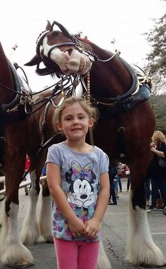 This Clydesdale Horse Already Has The Best Photobomb Of 2016 This little girl di. - This Clydesdale Horse Already Has The Best Photobomb Of 2016 This little girl did not know what was - Funny Horses, Cute Horses, Horse Love, Beautiful Horses, Animals Beautiful, Crazy Horse, Beautiful Cats, Beautiful Pictures, Funny Animal Memes