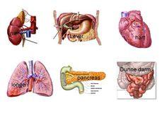 Pancreas is alvleesklier in het Nederlands
