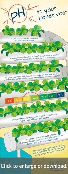 Did you know that the pH in your hydroponic system is just as important as your nutrients? Your pH and nutrients go hand-in-hand in your plants' development. Follow these simple tips for pH success in your indoor garden.