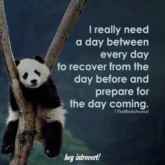 panda bear is a perfect example of an empath in balance. Yin- Yang / Black-white/ its all about balance. Empaths feel negative and positive emotions deeper. Have a higher energy surge running through them, and so they naturally need more time to recharge. Cute Quotes, Great Quotes, Funny Quotes, Funny Memes, Inspirational Quotes, Quotable Quotes, Jokes, Infj, Introvert