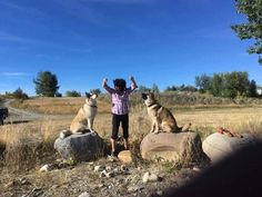 STILL MISSING: LOST: Male husky dog (Bory) and male Akita mix (Brody). Last seen #Longview. Call 403-933-5066. Pls RT share. If spotted PLS DO NOT CHASE. YYC Pet Recovery shared Wanda Wallator's post. CASH REWARD  THESE DOGS ARE STILL MIISSING SINCE OCT23  THEY WERE LAST SEEN IN THE LONGVIEW AB AREA PLAYING TOGETHER  THINKING SOMEONE PICKED THEM UP IN A VECHICLE ON HIGHWAY 541 OR HIGHWAY 22 NEVER SEEN THEM SINCE HOW CAN SOMEONE DO THIS TO TWO INNOCENT DOGS THEY DID NOTHING WRONG TO BE TAKEN…