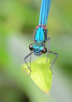 Insect Photography, Damselflies, Butterflies Flying, Weird And Wonderful, Portraits, Band, Insects, Sash, Head Shots