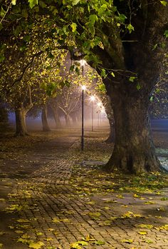path | foggy path through Jesus Green at Cambridge University in England