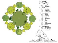 Resultado de imagem para oak guild permaculture