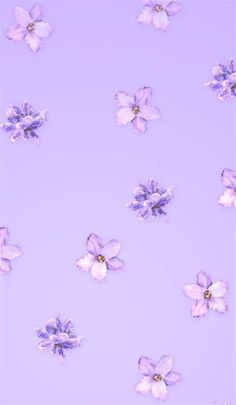 Iphone Aesthetic Purple Lavender Lilac Iphone Aesthetic