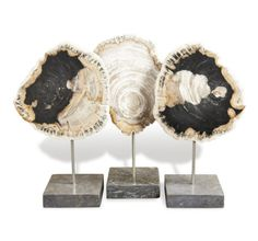 Shop Set of 3 Petrified Wood Trio Sculpture design by Interlude Home at Burkedecor. We have a huge range of Home Decor that are available in various styles and colours. Transitional Home Decor, Transitional Kitchen, Wood Stool, Garden In The Woods, Petrified Wood, Minimalist Decor, Wood Sculpture, Art Sculptures, Home Decor Styles