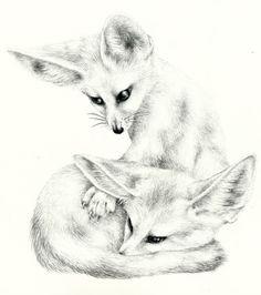 Fennec Fox Drawing Two little fennec foxes