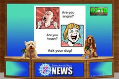 BFTB Channel 7 NETWoof News by mkclinton.com All of the #news that you need to know from trusting #dogs!