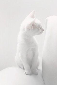white cat, white chair, white wall