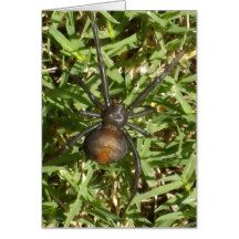 Big_Female_Redback_Spider,_ Greeting Card