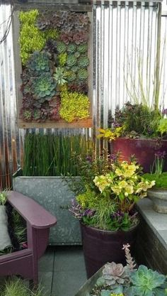 Jardim parede suculenta por cg