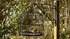 The Bird Feeder Cage - Anti Squirrel and Pigeon Proof - Help Small Garden Birds!