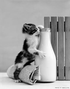 amazing shot ;-)) kitty cat drinking milk from  bottle ♥♥♥