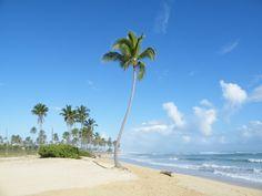 Caribbean Palm Tree Beach @ Punta Cana, Republica Dominicana 2009