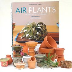 Miniature Gardening with Air Plants - Ideas and insight inspired by a new book from Timber Press Garden Terrarium, Garden Plants, Terrariums, Miniature Fairy Gardens, Mini Gardens, Fairy Garden Houses, New Crafts, Air Plants, Design Crafts