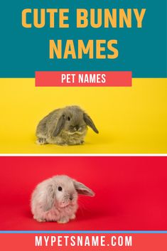 Bunnies are some of the most adorable pets that you could keep, and finding a cute name for them is important! Pet bunnies can be potty trained and taught to respond to cute Bunny names, which makes them the perfect pet.  #bunnynames #cutebunnynames #rabbitnames Rabbit Names, Bunny Names, Cute Pet Names, Cute Bunny, Bunnies, Cute Animals, Pets, Pretty Animals, Bunny