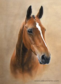 MOLLY, pastel on pastel card by Ali Bannister. Commissioned as a 60th birthday present - Molly the thoroughbred x polo pony. For limited edition prints and information on commissions see: www.alibannister.com