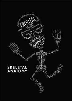 Amy Kwan: Skeletal Anatomy Quelle: behance.net #Illustration #Typography #science #anatomy #skeleton
