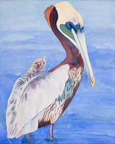Brown pelican by Erin Williams, watercolor painting available as a fine art giclee print from Erin Williams Watercolor's Etsy shop. #santabarbara #watercolor