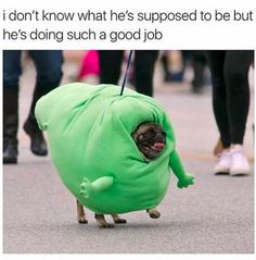 Just 21 Dog Memes That Will Bring You Joy And Happiness. What a cute pug being Slimer from Ghostbusters!!