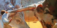 Teresa Elliott: Beautiful light and color palette in these cow paintings