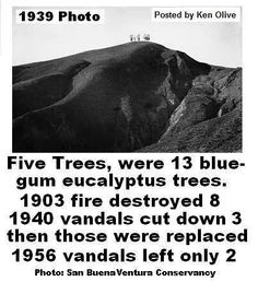 History of Ventura's Two Trees