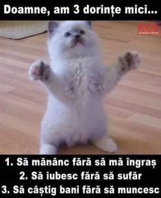 """""""I lubs you dis much, hoomin""""! - LOLcats is the best place to find and submit funny cat memes and other silly cat materials to share with the world. We find the funny cats that make you LOL so that you don't have to. Funny Cat Memes, Funny Pranks, Funny Posts, Funniest Memes, Funny Animal Pictures, Funny Animals, Cute Animals, Silly Cats, Crazy Cats"""