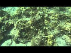 Otranto,14) Spiaggia azzurra, Baia dei turchi - YouTube