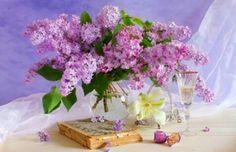 Lilac (jorgovan)