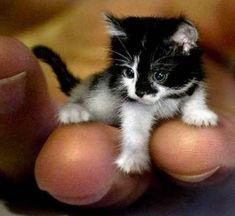 finger kitten
