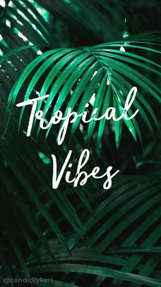 Tropical vibes summer palm trees palms typography inspirational motivational quote background wallpaper you can download for free on the blog! For any device; mobile, desktop, iphone, android!