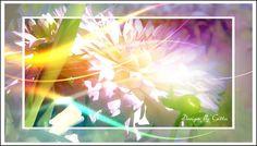 - BILD KLICKEN -Digitaler Blumentraum 03   als Collage Bilder gearbeitet ist Fotokunst die auf Artflakes als Poster, Kunstdruck, Leinwand und Galeriedruck zu bestellen ist  Bilder für alle Wohnwände wie Wohnzimmer, Schlafzimmer, Büro, Flur oder auch für eine Praxis. Mit Apophysis entstehen schöne Bilder in Digital Art.Das ist Digitale Kunst in Fineartprint. - Auch auf meiner Homepage - www.bilddesign-by-gitta.de - unter Meine Shops - Artflakes zu finden.