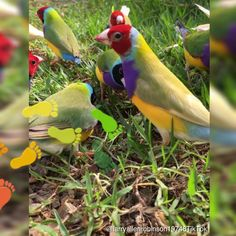 So beautiful and colorful is our nature. – Tiere – … So beautiful and colorful is our nature. Funny Birds, Cute Birds, Pretty Birds, Beautiful Gif, Beautiful Birds, Animals Beautiful, Cute Baby Animals, Animals And Pets, Funny Animals