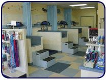 dog wash picture 1 Diy Dog Wash, Dog Washing Station, Dog Grooming, Pet Shop, Favorite Things, Indoor, Pets, Store, Building