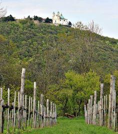 Vienna wineries