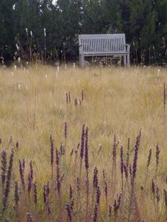 East Mountains Meadow with Gayfeather