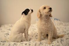 Sophie e Roki