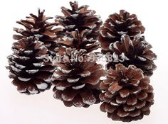 8pcs 3CM Pine Cone New Year Christmas Tree Decoration Pinecone Ornaments  Festival Christmas Decorations Gifts-in Christmas Decoration Supplies from Home & Garden on Aliexpress.com | Alibaba Group