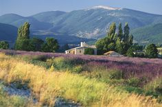 All the Reasons Provence Is the Most Amazing Part of France