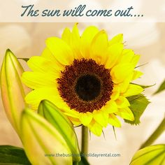 The brighten up your day #sunflower