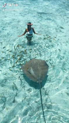 Beautiful Sea Creatures, Animals Beautiful, Funny Animal Videos, Cute Funny Animals, Nature Animals, Animals And Pets, Amazing Beasts, Underwater Creatures, Beautiful Places To Travel