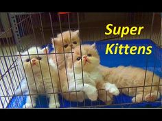 Funny Kittens Up And Down So Cute | Funny Kittens 2016 | Meo Cover Home