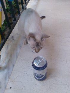 Η περιεργεια εσωσε την γατα!!! #fixhellas