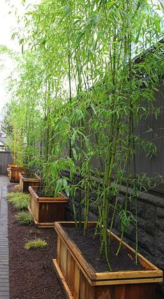 DIY - How To Grow Bamboo & Modernize Your Home! #gardens..