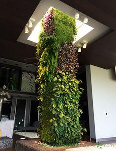 Ecosistema vertical compuesto por 13 muros verdes: diez meses después de su plantación